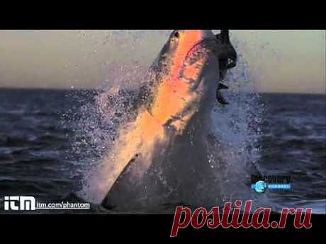 Нападения акул - YouTube
