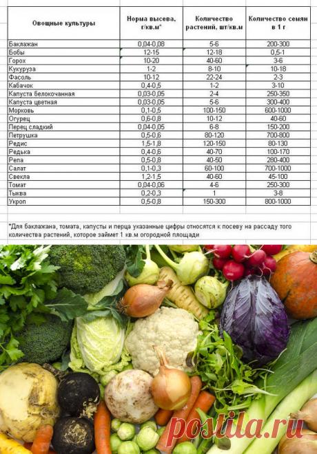 Сколько надо семян - планирование посадок овощей