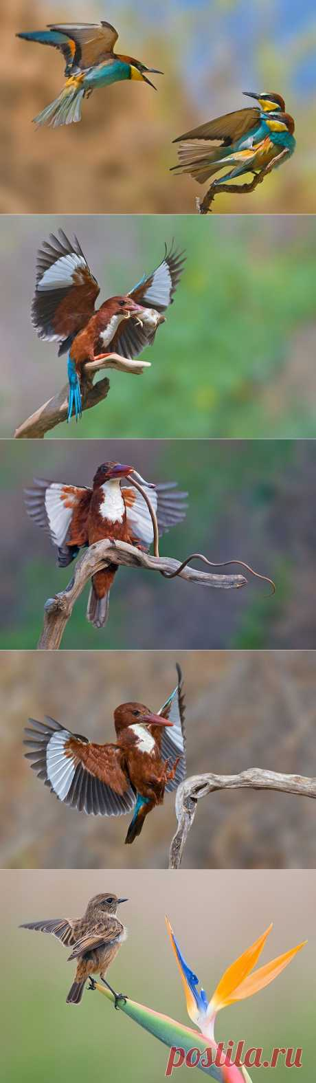 Удивительные фотографии птиц Яки Зандера :  НОВОСТИ В ФОТОГРАФИЯХ