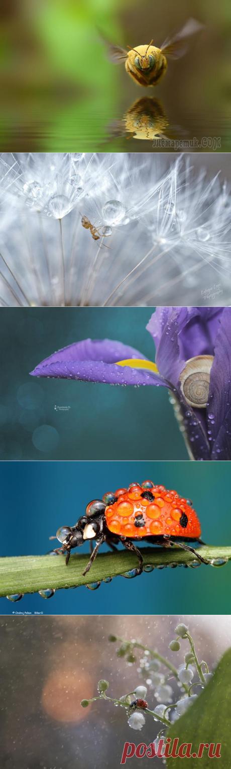 20 macrofotografías más populares en 500px este año