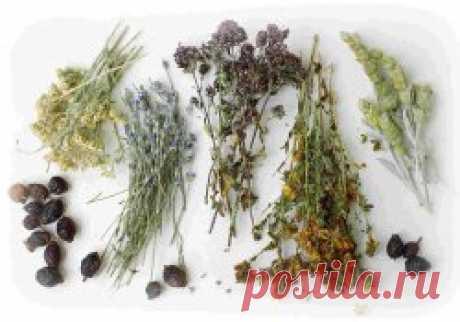 Сроки хранения некоторых лекарственных растений - Садоводка