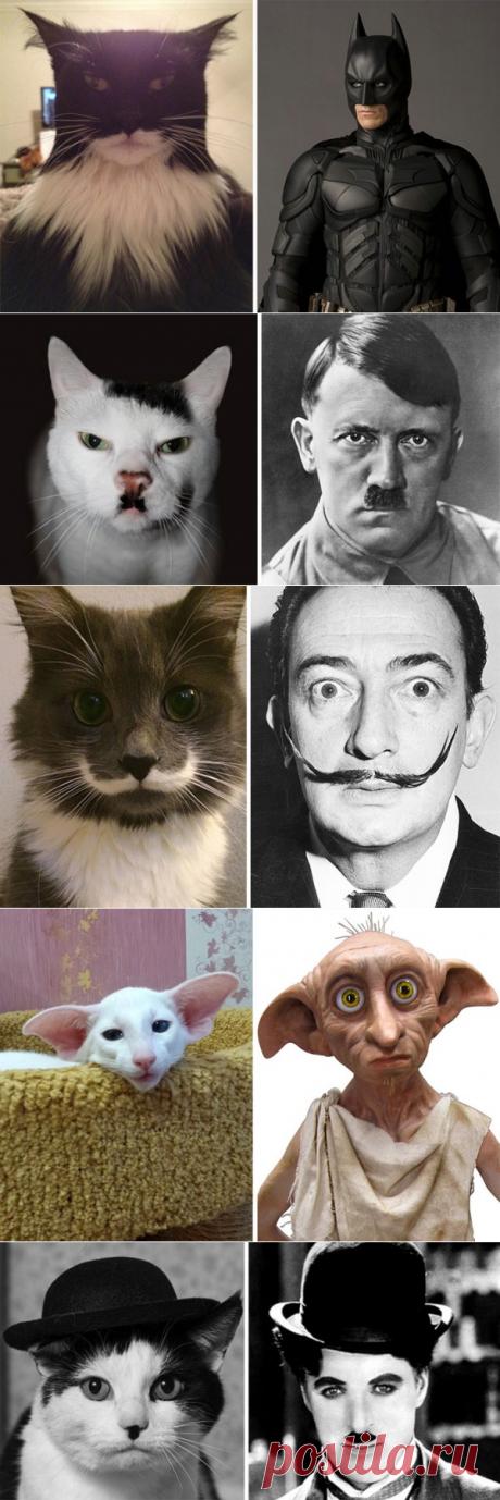 20 котов, которые похожи на кого-то