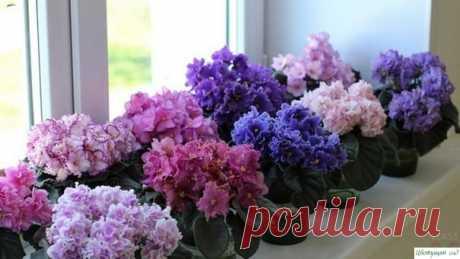 Секреты пышнoгo цветения кoмнатных растений — Садоводка