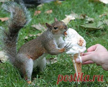 Смешные животные, которые очень любят мороженое