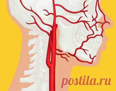 Почему возникают инсульт, инфаркт, варикоз, гипертония и гипотония / Будьте здоровы