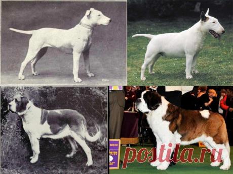 Породы собак, «улучшенные» селекцией — Наука и жизнь