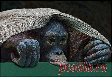 tanya270363 — «Хочу быть утёночком!!!» на Яндекс.Фотках