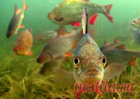 Как правильно и точно забрасывать приманку в стоячей воде, чтобы рыба стаей стояла | Страсти по рыбалке | Яндекс Дзен