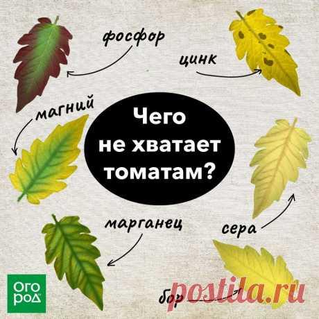 Огород.ru - Главная   Facebook