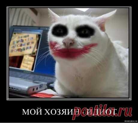 клоун-кот