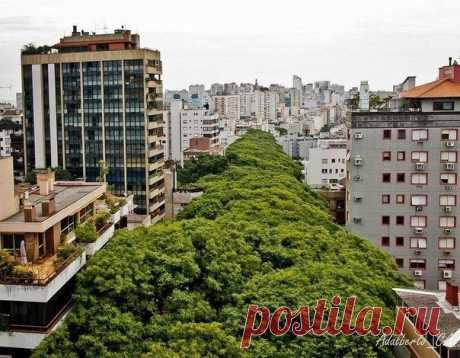 Самая зеленая улица мира — Путешествия