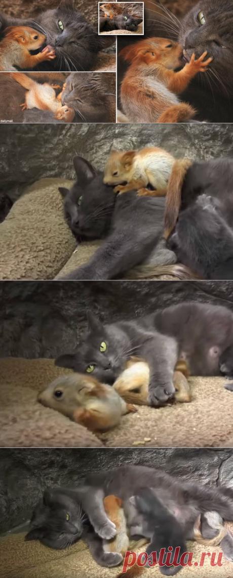 Кошка приютила 4 маленьких белочек, которые нуждались в маме | В темпі життя