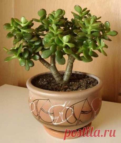 Формируем денежное дерево.