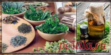 Эфирное масло полыни лимонной таврической: свойства и применение