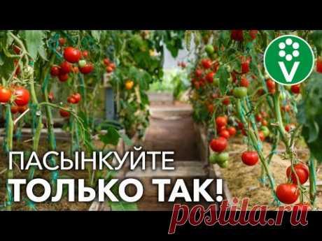 ФОРМИРУЙТЕ ТОМАТЫ ПРАВИЛЬНО! Все нюансы пасынкования для лучшего урожая в теплице