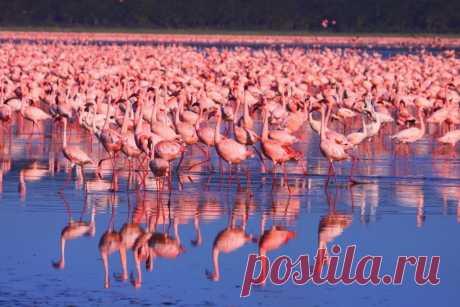 Национальный парк Озеро Накуру, Кения