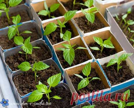 Cuando sentar las plantas en 2017. A nosotros, en Rusia es aceptado cultivar hortalizas a través de las plantas, de otro modo no conseguirán madurar simplemente por la temporada veraniega. Además, si plantar las plantas correctamente, se puede recibir la primera cosecha julio y naslazhd …