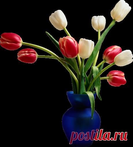 Тюльпаны, PNG