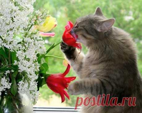 Какие запахи отпугивают кошек - 6 запахов которые не любят и боятся кошки, чтобы отпугнуть кошку от неположенных мест (например, грызть цветы на подоконниках, запрыгивать на стол, или хозяйничать на кухне)