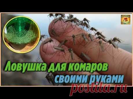 Как сделать ловушку для комаров своими руками из пустых пластиковых бутылок. Дачные хитрости - YouTube