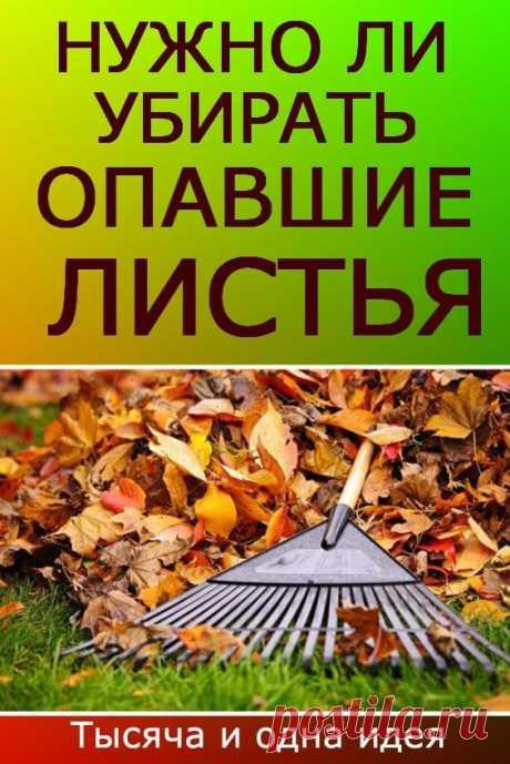 Нужно ли убирать опавшие листья в саду? | Тысяча и одна идея