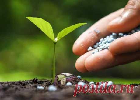 Чем подкормить огурцы для роста в открытом грунте Общая информация об удобрениях Огурец подкармливают минеральными и органическими средствами. Он питается за счёт минеральных веществ, содержащихся в почве. Грунт имеет в составе неорганические соедине...