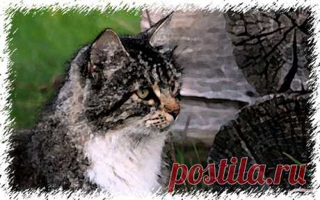 Блудный кот не узнал свой дом - Смешные истории из жизни