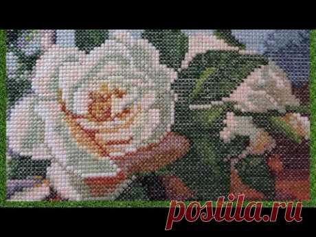Букет Белых роз с 12 по 20 сентября 2019г