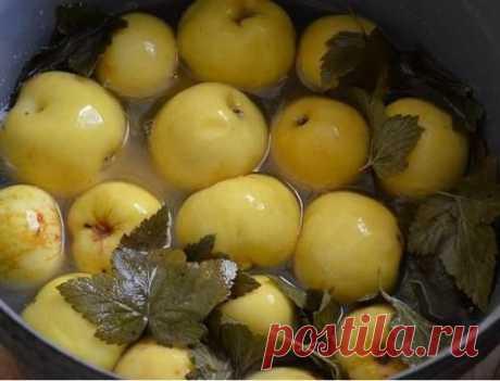 (290) Заготовки на зиму яблоки, кабачки и т.д.