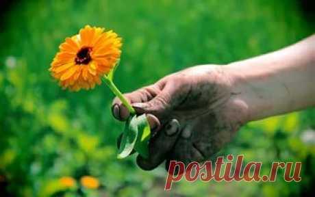 Руки после огорода