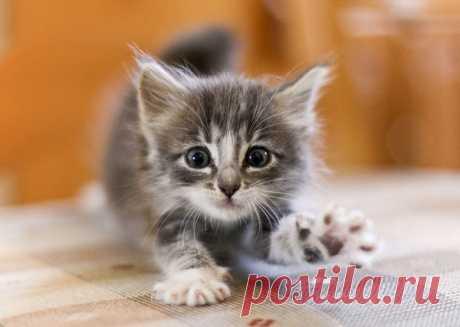 Котенок в доме: уход, воспитание, ветеринарная помощь