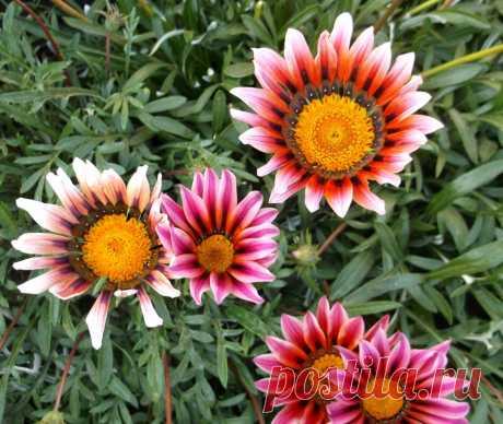3 вида любимых цветов, которые я сею в январе