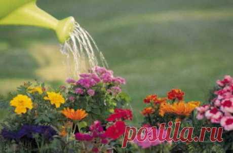 Основные правила полива растений на участке | Дача - впрок