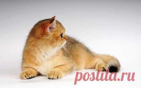 Скачать обои для рабочего стола - кошки и коты | Blog812