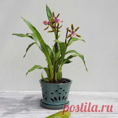 Как сажать орхидею в горшок: правила, секреты и полезные совет