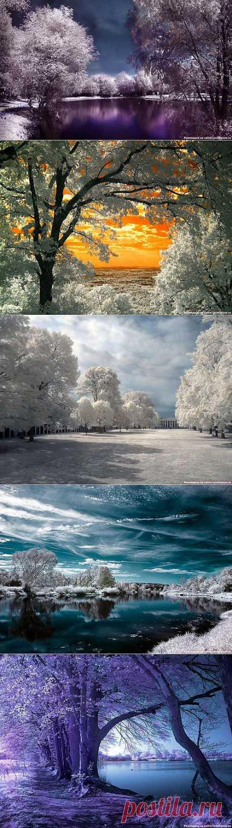 Las fotografías extraordinarias infrarrojas (la parte 1)