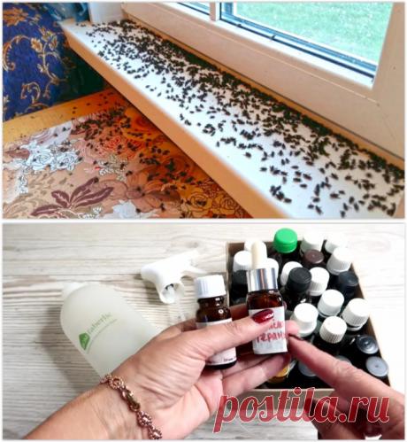 Делюсь простым и безопасным способом как избавиться от мух, комаров и мошек в доме.