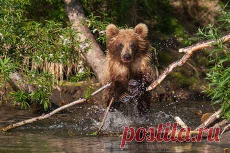 «На рыбалке». Курильское озеро, Камчатка. Автор фото — Сергей Краснощеков: nat-geo.ru/photo/user/4125/