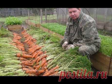 ▶ Как вырастить урожайную морковь на высоких грядках - YouTube