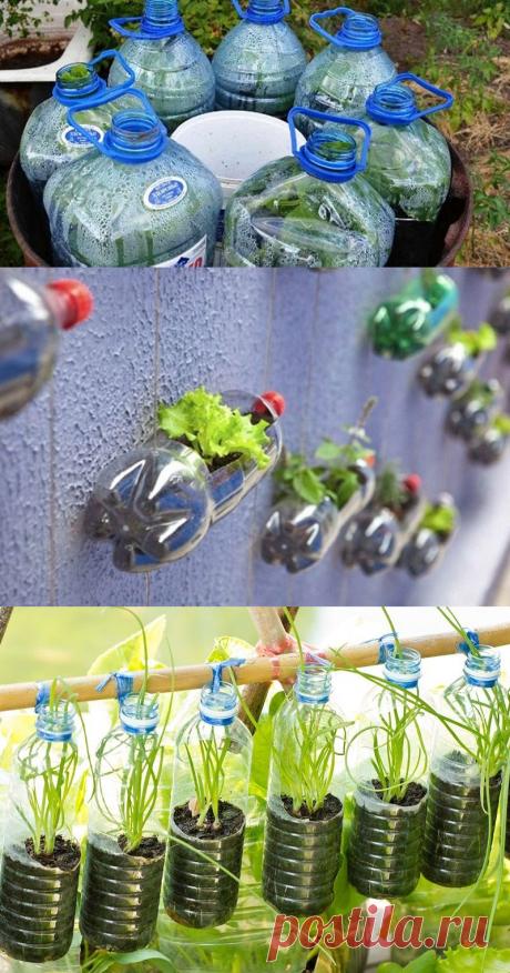 Новейший способ: огурцы в бутылках! Очень удобно и выгодно. Отличная идея!