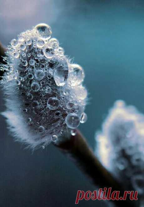 Ни одна зима не длилась вечно, Ни одна весна не пропускала свой приход...