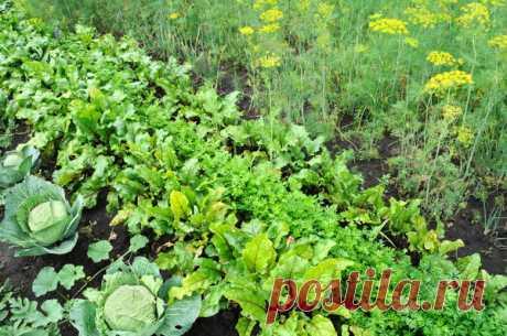 Руководство для садовых чайников / начинающим садоводам / 7dach.ru