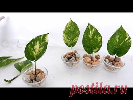Creative Single-Leaf Money Plants on Vertical Wood Panel for Bedroom or Living Room Wall Decor - YouTube