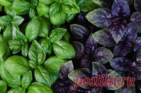 ТОП-7 продуктов, которые можно вырастить на подоконнике — Полезные советы