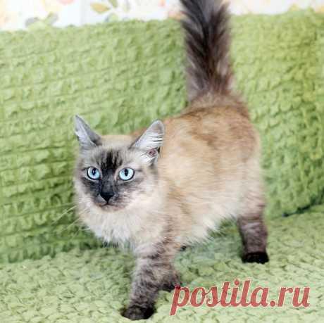 У Меня Лапки в Instagram: «Тайская красотка Агнесс ищет дом Эта красивая и благородная кошка голубоглазка на первый взгляд кажется очень серьезной мадам, но на самом…» 20 отметок «Нравится», 0 комментариев — У Меня Лапки (@y_menia_lapki_) в Instagram: «Тайская красотка Агнесс ищет дом Эта красивая и благородная кошка голубоглазка на первый взгляд…»