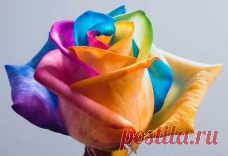 Радужные цветы - Путешествуем вместе