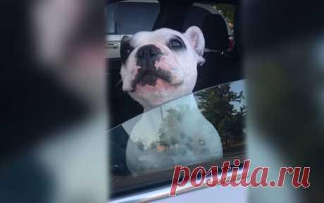 Собака спела оперную арию из окна автомобиля - смешное видео Sputnik Южная Осетия говорит то, о чем другие молчат