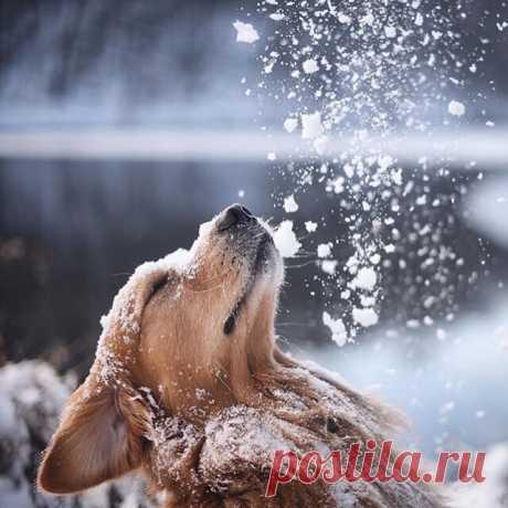 Доброе утро снег)