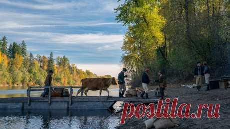 «Первая корова»: Келли Райхардт сняла выдающийся вестерн о краже молока — Статьи на КиноПоиске