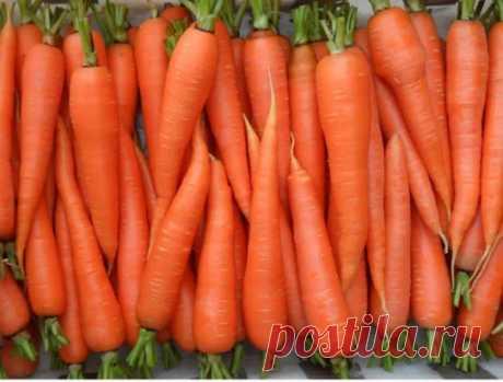 Морковь взойдет через 4 дня! Бесплатный совет от опытной дачницы